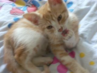 Mon nouveau chat - Page 4 Photo-080-1e662d2