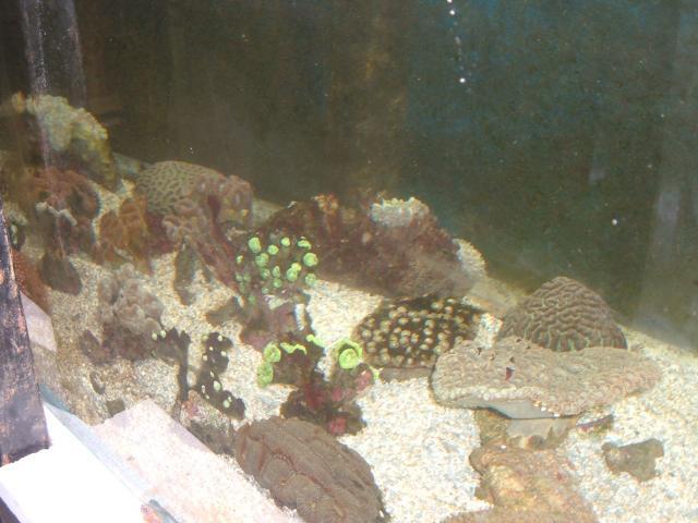 vends coraux durs Croraux-002-6d5f4a