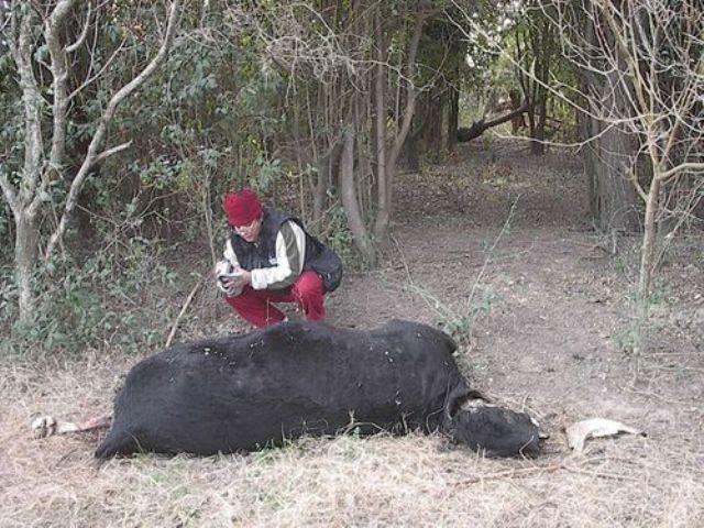 Argentine: Les cas de mutilations à la hausse Quebrachito-08-08-09-ar--01-11e3fa5