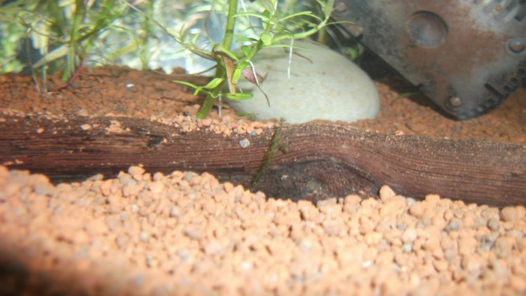 Mon nano à Red Cherry 25L 062-26edeae