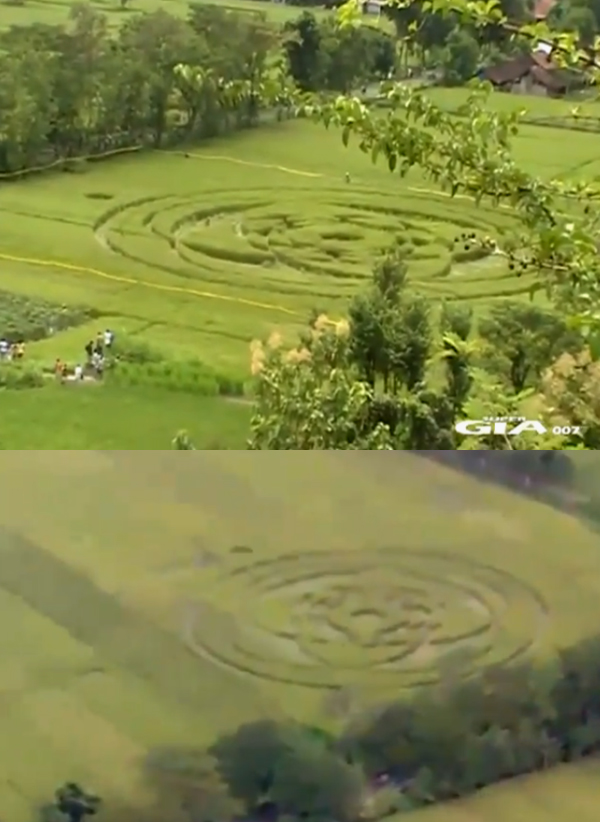 Crop Circle 2011  Indon-sie-01-24e1c2c