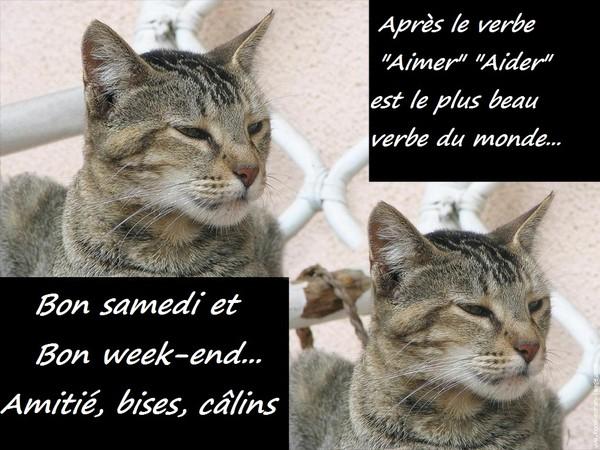 Samedi16 Juillet Samedi-chat-2ada0e9