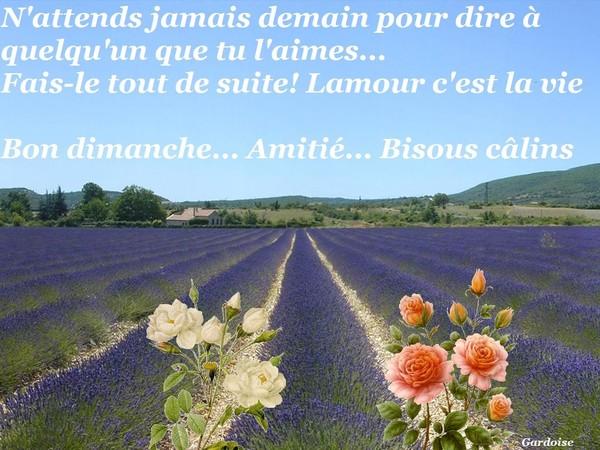 Dimanche 31 Juillet Dimanche-amour-vie-2b59916