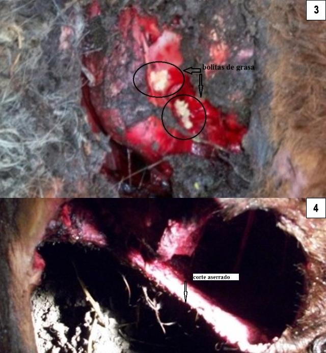 Argentine, deux nouveaux cas de mutilations. P003-4-29196c4