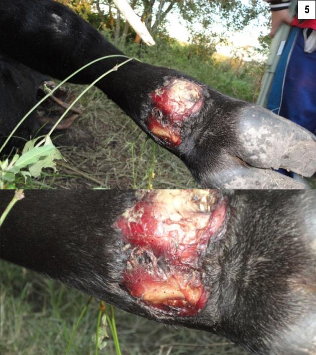 Argentine, deux nouveaux cas de mutilations. P000b-2919648