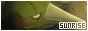 Pokemon Sunrise 88x31-2-2b44cd6
