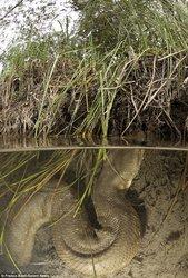 Foto Anaconda Super Besar Di Brazil Ukpiww7gto9c_t