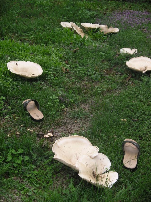 reconnaitre les champignons - Page 13 Imgp6576-387871a