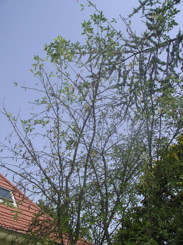 Déjà un petit air d'automne ... A-ut-2012-008-37b064a