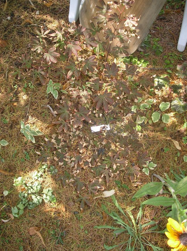 Déjà un petit air d'automne ... A-ut-2012-009-37b05fc