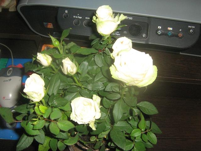 """Мои цветочки ... Занятие для души)))""""  28ef446b509d4a54be9986af0d2ce194_big"""