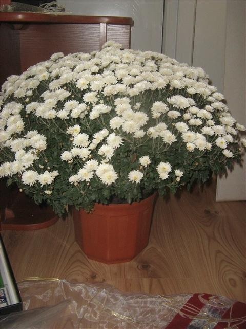 """Мои цветочки ... Занятие для души)))""""  9f41df8e2ea1423fa4e84a4c727ca3a1_big"""