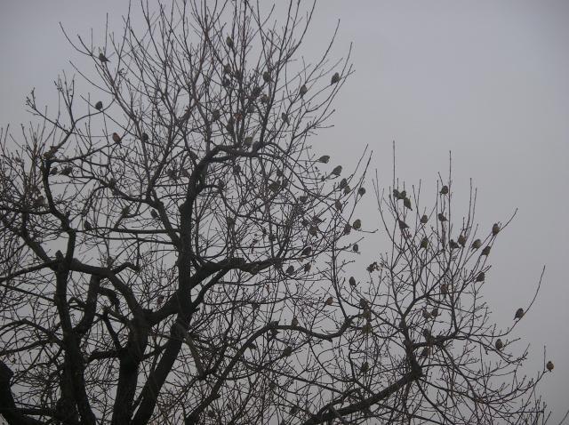 mon arbre à oiseaux Imgp7069-3c3ec10