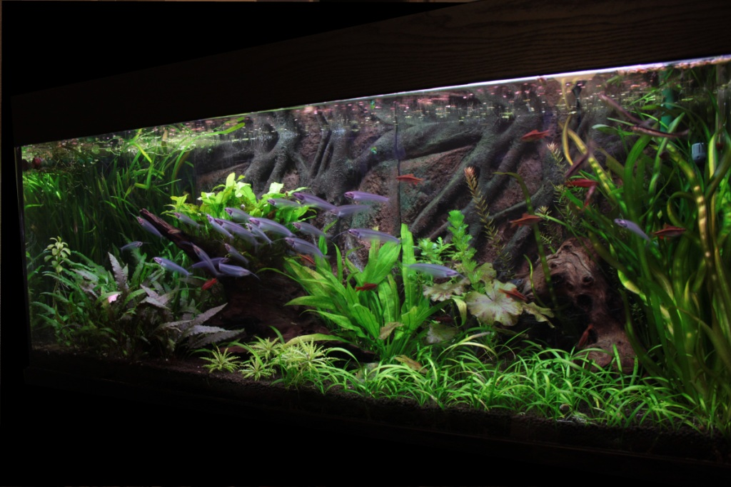 250L Asiatique planté - Page 3 Blk-img_8511-3c7fc79