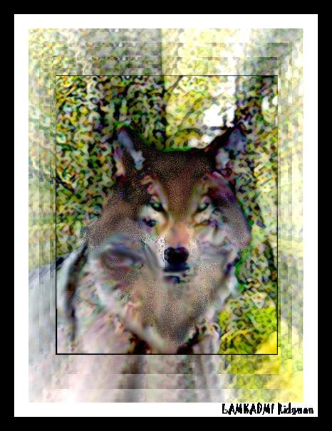 Le loup Lamkadmi-ridouan-3d06fa3
