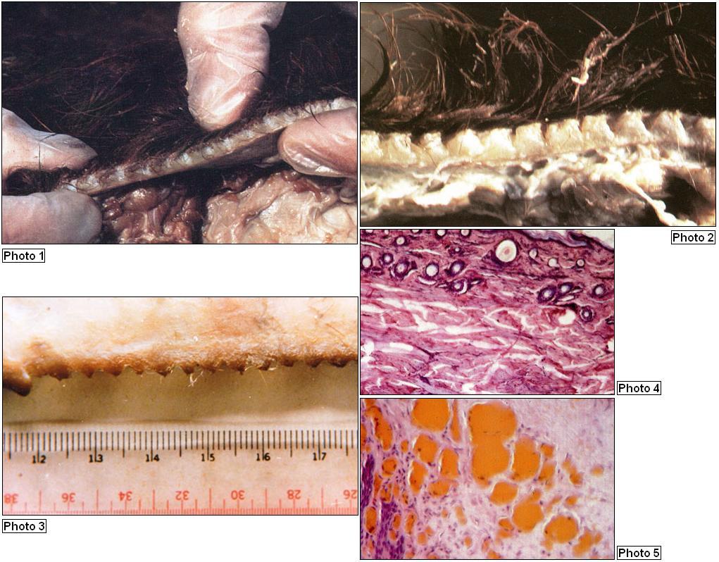 Pourquoi une rubrique entière du forum sur les Mutilations Mutilations---coupes-01--3e1acde
