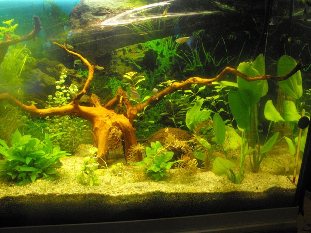 L'aquarium de gomorck - Page 2 Dscf8907-420759c