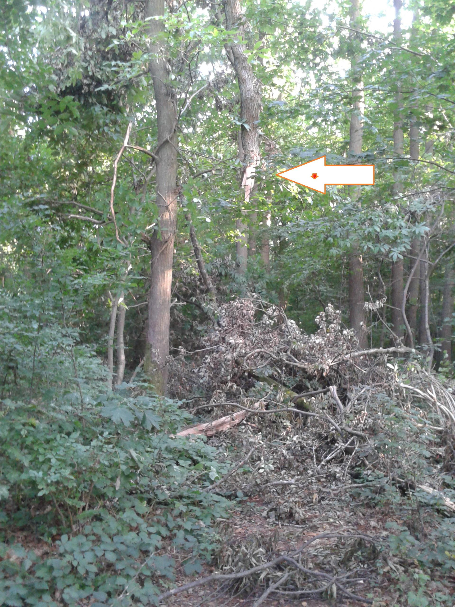 La Garenne SAMEDI 24 Aout 2013  Annulée refection Terrain cause intempérie arbres cassés 2013-08-08-19.14.02-401c1a7