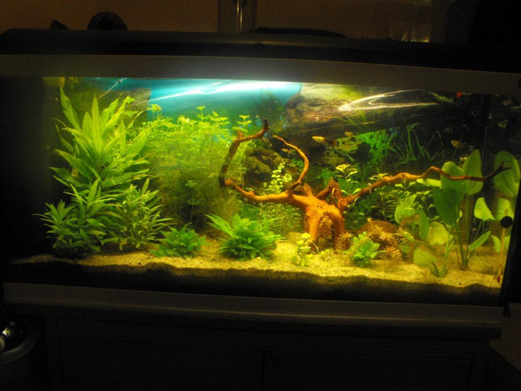 L'aquarium de gomorck - Page 2 Dscf8905-4207567