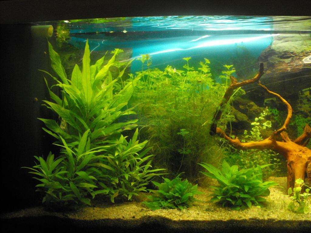 L'aquarium de gomorck - Page 2 Dscf8906-4207573