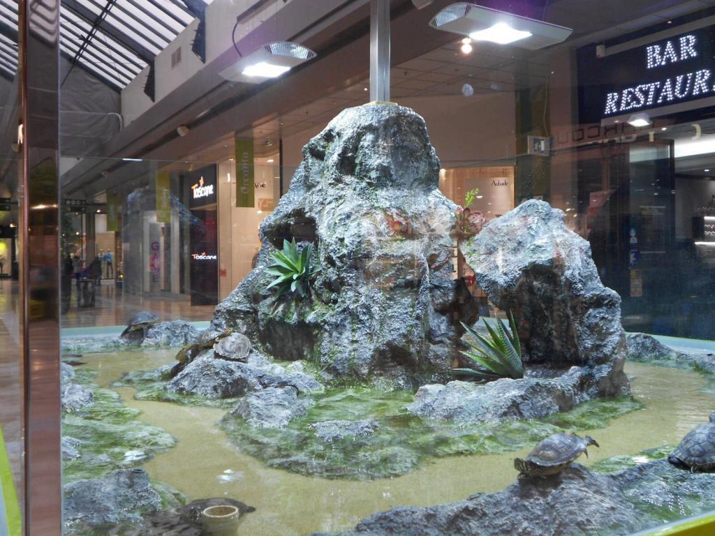 Trachemys dans un centre commercial (! ) dans un sale état ! - Page 4 Image-41cebc8
