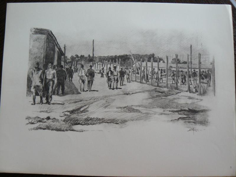 """3 séries de """"dessins de captivité"""" P1090064-42b0a3f"""