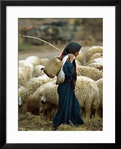 Le bâton de Moïse et d'Aaron An-iraqi-shepherd-a-young-girl-herds-her-sheep_i-G-39-3912-ZV8XF00Z