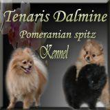 kennel Tenaris Dalmine