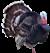 Індики, Turkeys