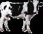 Корови та інші ВРХ