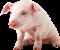 Свині, Pigs