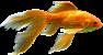 Рибки акваріумні, Fish, aquarium