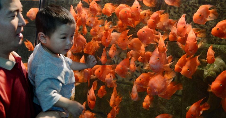 Peixe Papagaio - Página 2 30mai2012---pai-mostra-ao-filho-peixes-papagaio-de-sangue-no-aquario-de-pequim-o-maior-da-china-com-mais-de-1000-especies-1338410500070_956x500