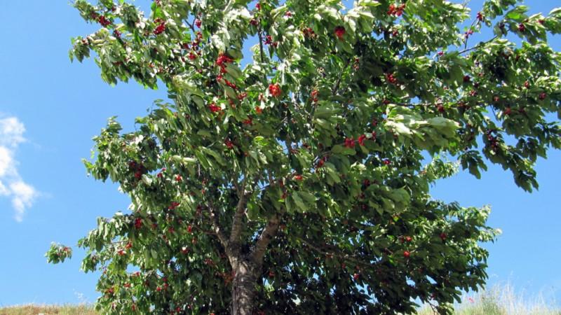 A Sierra de la Culebra Img_5783-800x600