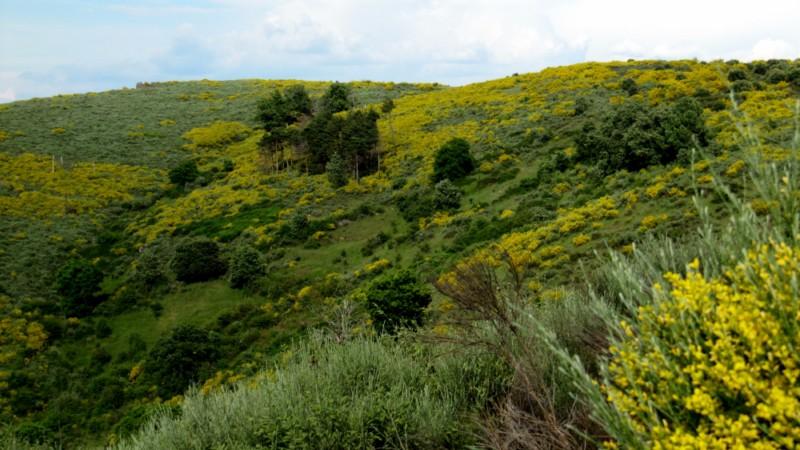 A Sierra de la Culebra Img_5880-800x600