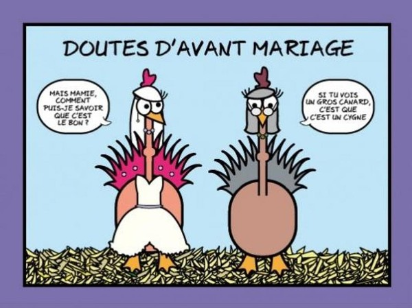 """Les """"Stupid Zèbres"""" c'est nous... - Page 2 E66e3569"""