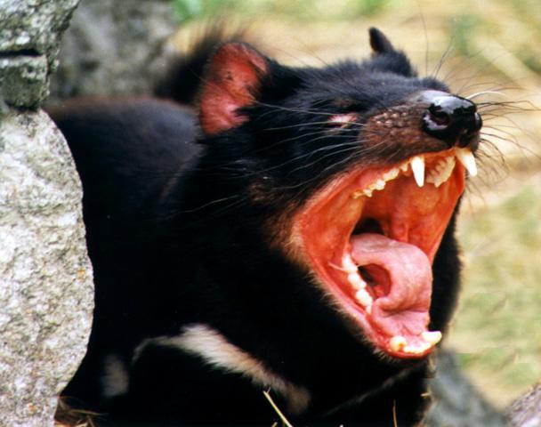 ALF (Animal Liberation Front) Devil02