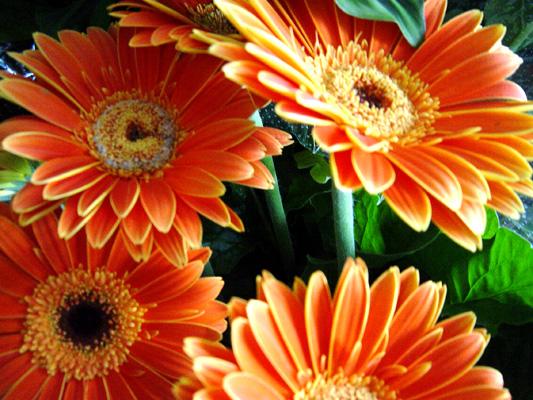 BUSQUEMOS HERMOSAS FLORES - Página 3 20060807142503_flores_-022
