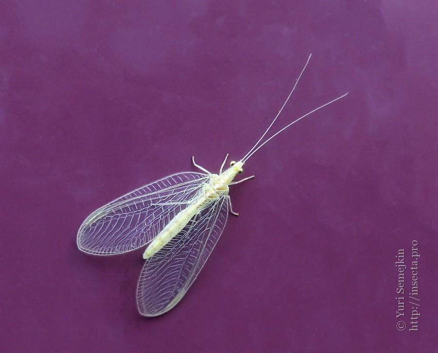 Bộ sưu tập côn trùng 2 - Page 24 45498