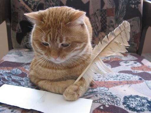 Авка в подарок Kot