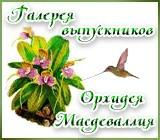 Галерея выпускников  орхидея масдеваллия Anons.1529994561