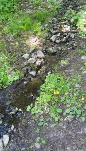 Лето-это маленькая жизнь. Фотоконкурс - Страница 2 12.1501420801