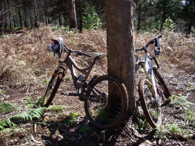 Review SX Trail Pbpic1976796