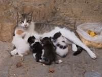 [Tregim islam] Kujdesi për macen, shkak i shërimit të nënës!! 200-150_1426512309