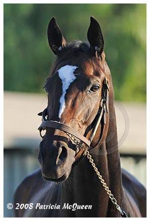 Slike poznatih galopera(konja) Zenyatta