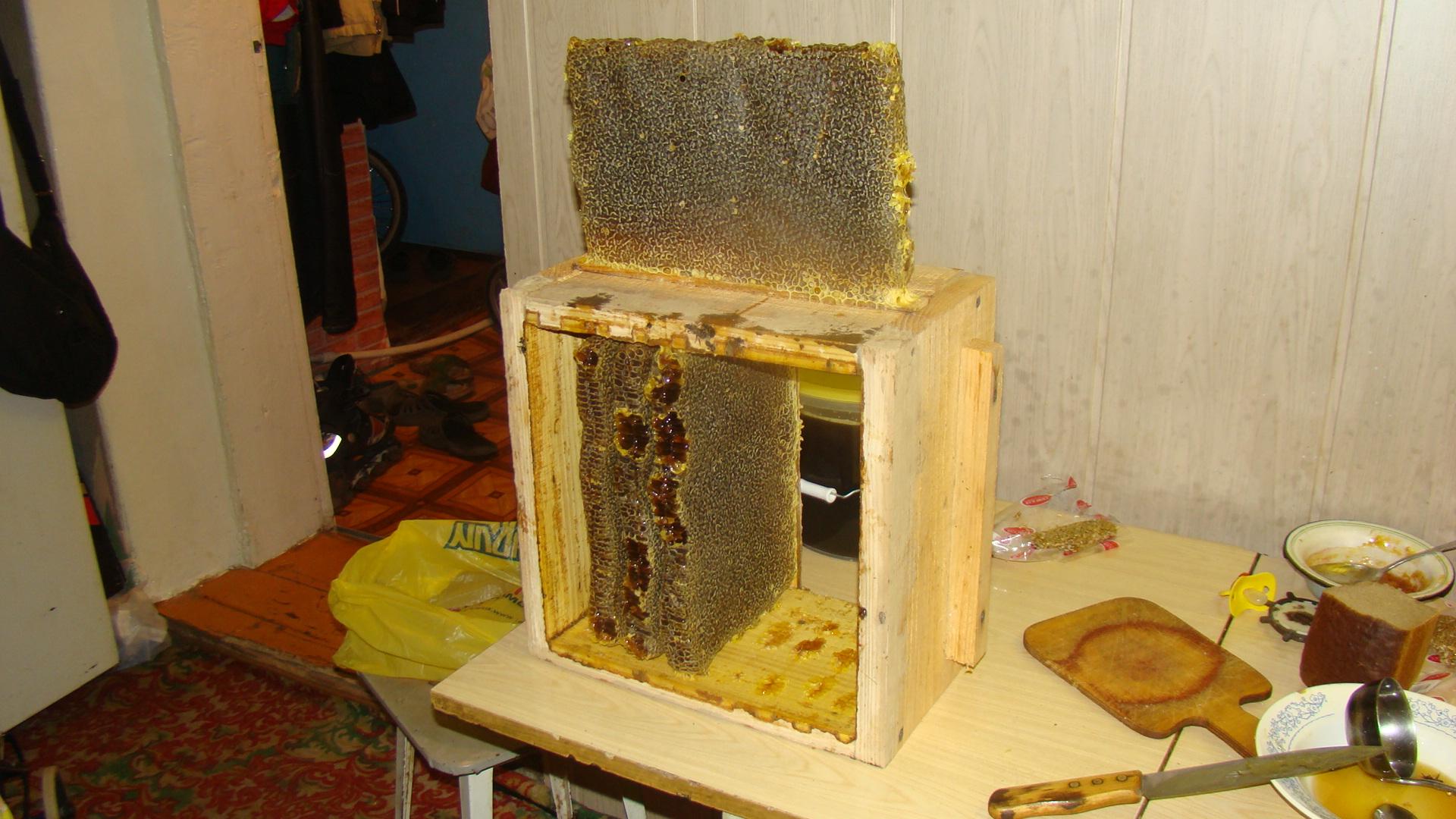 Пчеловоды есть? Всё о пчеловодстве - Страница 3 0157690001377359392