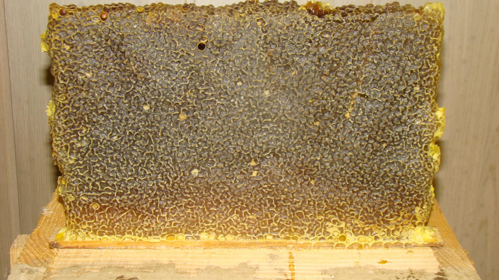 Пчеловоды есть? Всё о пчеловодстве - Страница 3 0229294001377359330