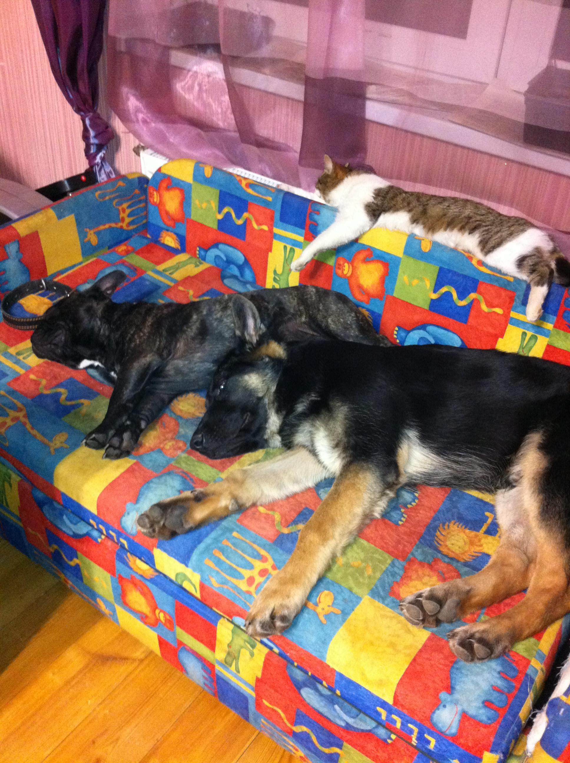 Домашние любимцы Кошки и Собаки 0092175001404881448