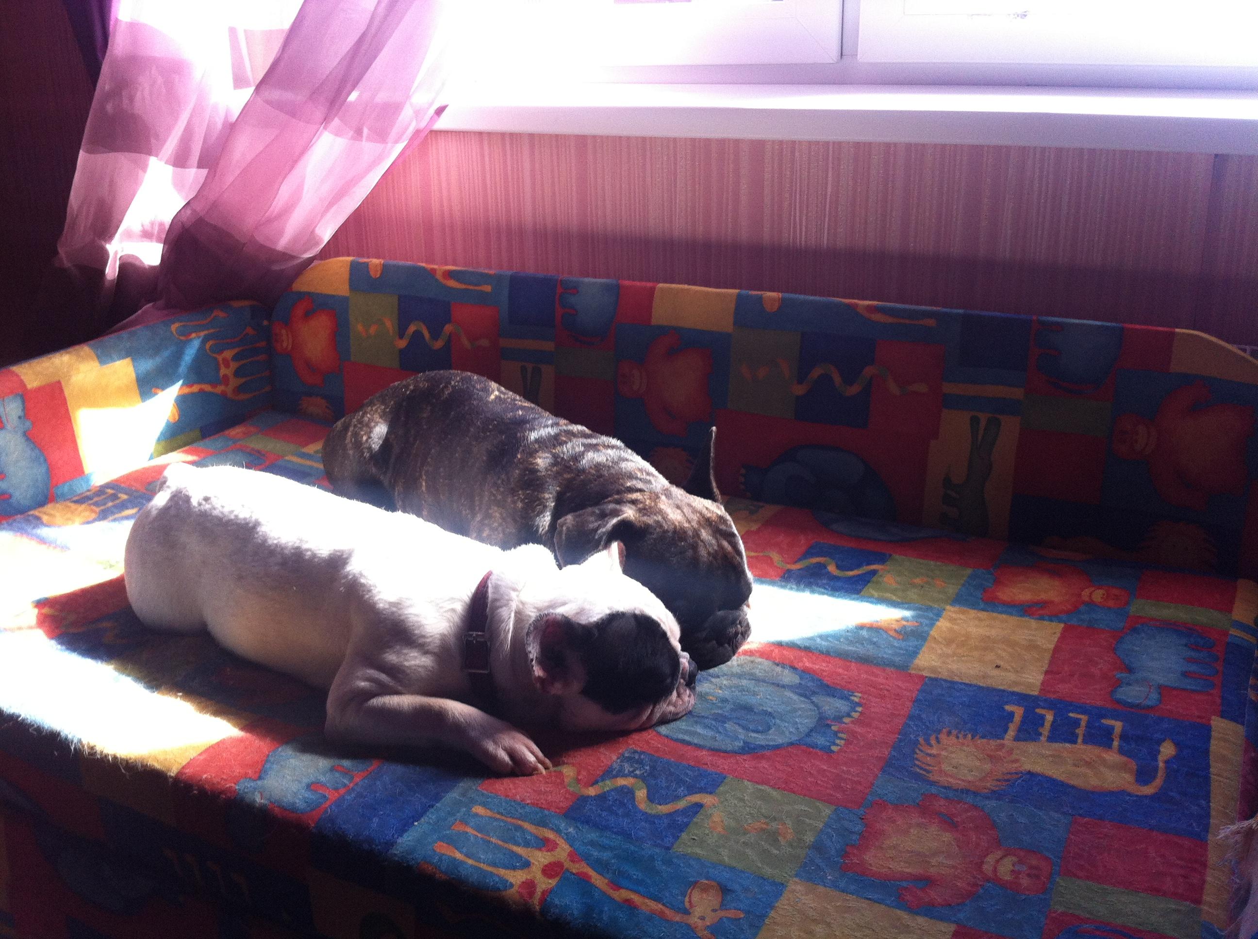 Домашние любимцы Кошки и Собаки 0305949001404881260