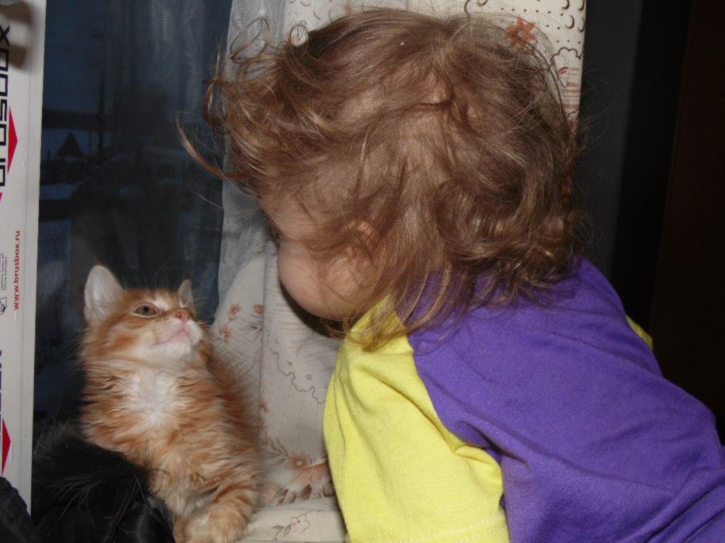 Домашние любимцы Кошки и Собаки 0406785001405846153